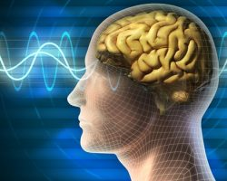 Food Impacts On Brain Activity