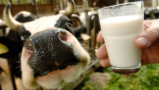 The Raw Milk Debate