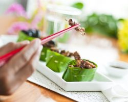 You Already Eat 1/2 Kg Of Insects Per Year – Entomophagy And Gastronomy
